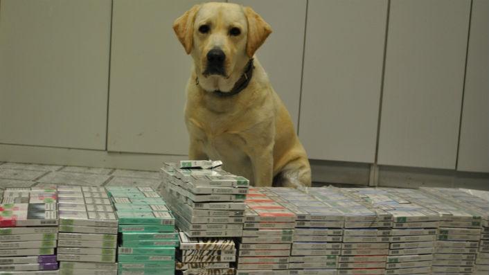 Pies wywęszył kontrabandę o wartości 24 tyś. złotych