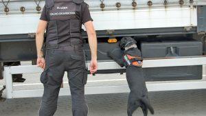 Wytropi nie tylko papierosy, ale i walutę – pierwszy taki pies na podkarpackiej granicy